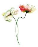 Διακοσμητικά άγρια λουλούδια ελεύθερη απεικόνιση δικαιώματος
