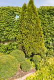 Διακοσμητικά δέντρα υπό μορφή σφαίρας Στοκ Εικόνες