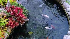 Διακοσμητικά ζωηρόχρωμα χλωρίδα λιμνών και βιντεοκλίπ πανίδας φιλμ μικρού μήκους