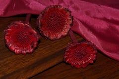 Διακοσμητικά λουλούδια από τον κάρδο Στοκ εικόνες με δικαίωμα ελεύθερης χρήσης