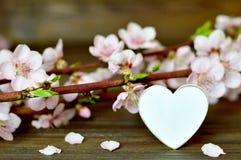 Διακοσμητικά λουλούδια καρδιών και άνοιξη Στοκ Εικόνες