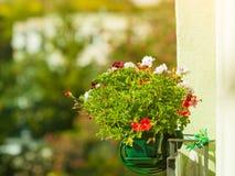 Διακοσμητικά λουλούδια μπαλκονιών στα δοχεία με την κρεμάστρα Στοκ Εικόνες