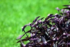 Διακοσμητικά λουλούδια σε ένα πράσινο υπόβαθρο Στοκ φωτογραφία με δικαίωμα ελεύθερης χρήσης