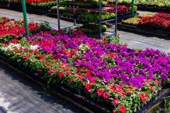 Διακοσμητικά λουλούδια στην πώληση Στοκ εικόνα με δικαίωμα ελεύθερης χρήσης