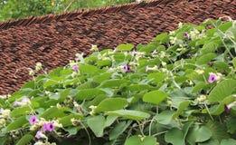 Διακοσμητικά λουλούδια στη στέγη Στοκ Εικόνες