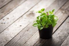 Διακοσμητικά φυτά στα δοχεία Στοκ Φωτογραφίες