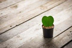 Διακοσμητικά φυτά στα δοχεία Στοκ εικόνα με δικαίωμα ελεύθερης χρήσης