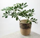 διακοσμητικά φυτά Στοκ εικόνα με δικαίωμα ελεύθερης χρήσης