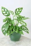 διακοσμητικά φυτά στοκ φωτογραφίες
