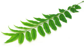 Διακοσμητικά φύλλα Στοκ φωτογραφίες με δικαίωμα ελεύθερης χρήσης