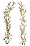 Διακοσμητικά χρυσά φύλλα Χριστουγέννων Στοκ Φωτογραφίες