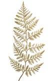 Διακοσμητικά χρυσά φύλλα Χριστουγέννων Στοκ εικόνα με δικαίωμα ελεύθερης χρήσης