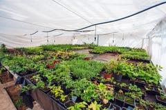Διακοσμητικές εγκαταστάσεις και λουλούδια στο σύγχρονο υδροπονικό βρεφικό σταθμό θερμοκηπίων ή το θερμοκήπιο, βιομηχανική δενδροκ στοκ φωτογραφία με δικαίωμα ελεύθερης χρήσης