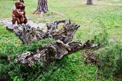 Διακοσμητικές κολόβωμα και ρίζα δέντρων ως διακόσμηση στοιχείων του ναυπηγείου Στοκ Εικόνες