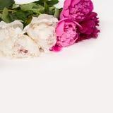 Διακοσμητική κάρτα με τα πολύχρωμα λουλούδια peonies στοκ εικόνες