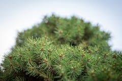 Διακοσμητική κινηματογράφηση σε πρώτο πλάνο κατώτατης άποψης δέντρων Στοκ φωτογραφίες με δικαίωμα ελεύθερης χρήσης