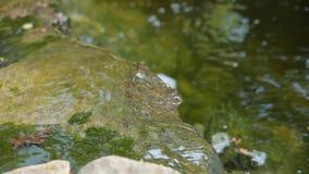 Διακοσμητική λίμνη με την πηγή και χρυσά ψάρια στον κήπο απόθεμα βίντεο