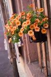 Διακοσμητική πρόσοψη σπιτιών λουλουδιών στη Colmar Στοκ Φωτογραφία