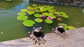 Διακοσμητικοί βάτραχοι και Lotus στην πηγή Στοκ Εικόνα