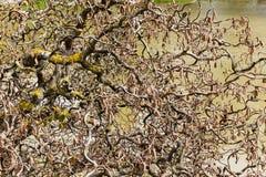 Διακοσμητικοί κλαδίσκοι φουντουκιών με τις αφηρημένες μορφές Στοκ εικόνες με δικαίωμα ελεύθερης χρήσης