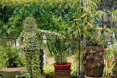 Διακοσμητικοί πράσινοι κήποι λουλουδιών στοκ εικόνες