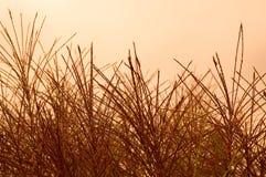 διακοσμητικοί σπόροι χλό&e Στοκ Φωτογραφίες