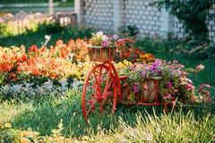 Διακοσμητικός αναδρομικός εκλεκτής ποιότητας πρότυπος εξοπλισμένος ποδήλατο κήπος λουλουδιών καλαθιών Στοκ Εικόνα