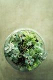 Διακοσμητικός κήπος εγκαταστάσεων επιτραπέζιων κορυφών σε ένα βάζο γυαλιού Στοκ Φωτογραφίες