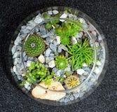 Διακοσμητικός κήπος εγκαταστάσεων επιτραπέζιων κορυφών Στοκ Εικόνες