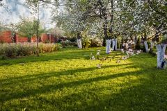Διακοσμητικός κήπος με ανθίζοντας τα μεγαλοπρεπώς μεγάλα δέντρα κερασιών και τα δέντρα της Apple σε έναν φρέσκο πράσινο χορτοτάπη Στοκ Φωτογραφίες