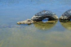 Διακοσμητικός κροκόδειλος στη λίμνη κάτω από τα λαστιχένια ελαστικά αυτοκινήτου στοκ φωτογραφία