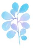 Διακοσμητικός μπλε κλάδος Watercolor Στοκ Εικόνα