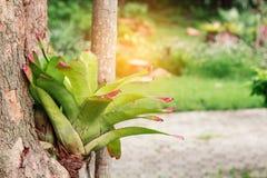 Διακοσμητικός που φυτεύεται στα δέντρα Στοκ εικόνες με δικαίωμα ελεύθερης χρήσης