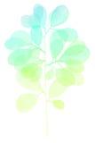 Διακοσμητικός πράσινος μπλε κλάδος Watercolor Στοκ εικόνες με δικαίωμα ελεύθερης χρήσης