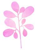 Διακοσμητικός ρόδινος κλάδος Watercolor Στοκ Εικόνα