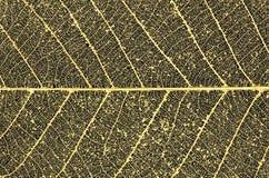 διακοσμητικός χρυσός σκ Στοκ φωτογραφία με δικαίωμα ελεύθερης χρήσης