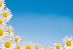 διακοσμητικός floral γωνιών Στοκ Εικόνες