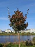 Διακοσμητικό δέντρο μηλιάς στην τράπεζα της λίμνης Στοκ φωτογραφία με δικαίωμα ελεύθερης χρήσης