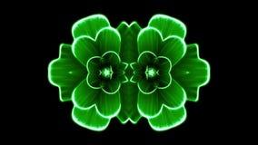Διακοσμητικό ανθίζοντας λουλουδιών υπόβαθρο ζωτικότητας σχεδίων καλειδοσκόπιων κινούμενο - νέα μορφή ποιοτικών διακοπών ζωηρόχρωμ απόθεμα βίντεο