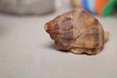 Διακοσμητικό αντικείμενο κοχυλιών θάλασσας σε ένα ράφι στοκ φωτογραφία