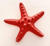 Διακοσμητικό αστέρι Ερυθρών Θαλασσών Στοκ Εικόνα
