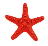 Διακοσμητικό αστέρι Ερυθρών Θαλασσών Στοκ Φωτογραφίες