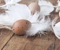 Διακοσμητικό αυγό στο φτερό Στοκ Εικόνα