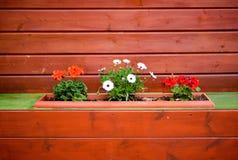 Διακοσμητικό δοχείο με τα λουλούδια στον ξύλινο χρωματισμένο τοίχο Στοκ Φωτογραφία