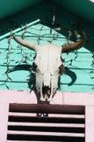 Διακοσμητικό κρανίο αγελάδων ` s Στοκ Φωτογραφίες