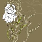 διακοσμητικό λουλούδι ελεύθερη απεικόνιση δικαιώματος