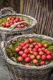 Διακοσμητικό μήλο για τα Χριστούγεννα Στοκ εικόνα με δικαίωμα ελεύθερης χρήσης