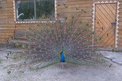 Διακοσμητικό πουλί στο ναυπηγείο δίπλα στην πόρτα στο σπίτι στοκ εικόνες με δικαίωμα ελεύθερης χρήσης