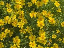 Διακοσμητικό υπόβαθρο εγκαταστάσεων λουλουδιών Planty κίτρινο Στοκ φωτογραφίες με δικαίωμα ελεύθερης χρήσης