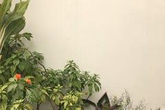 Διακοσμητικό φυτό και λουλούδι με τα πράσινα φύλλα και το υπόβαθρο τοίχων Στοκ Φωτογραφίες